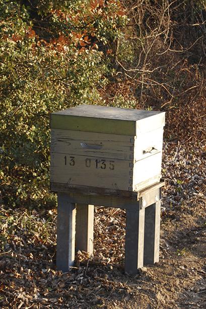 Nos ruches au milieu des amandiers