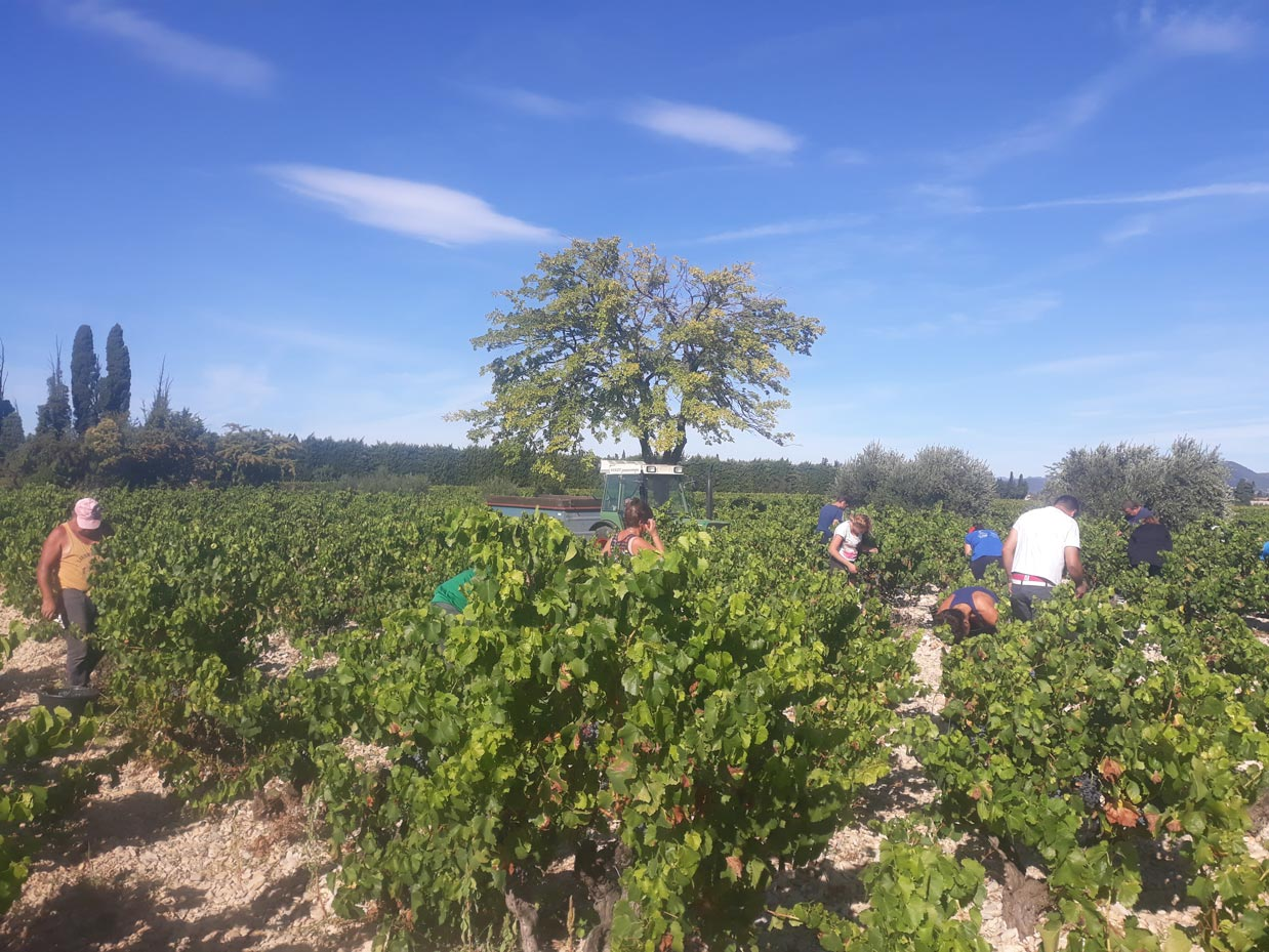 Vendanges manuelles 2018